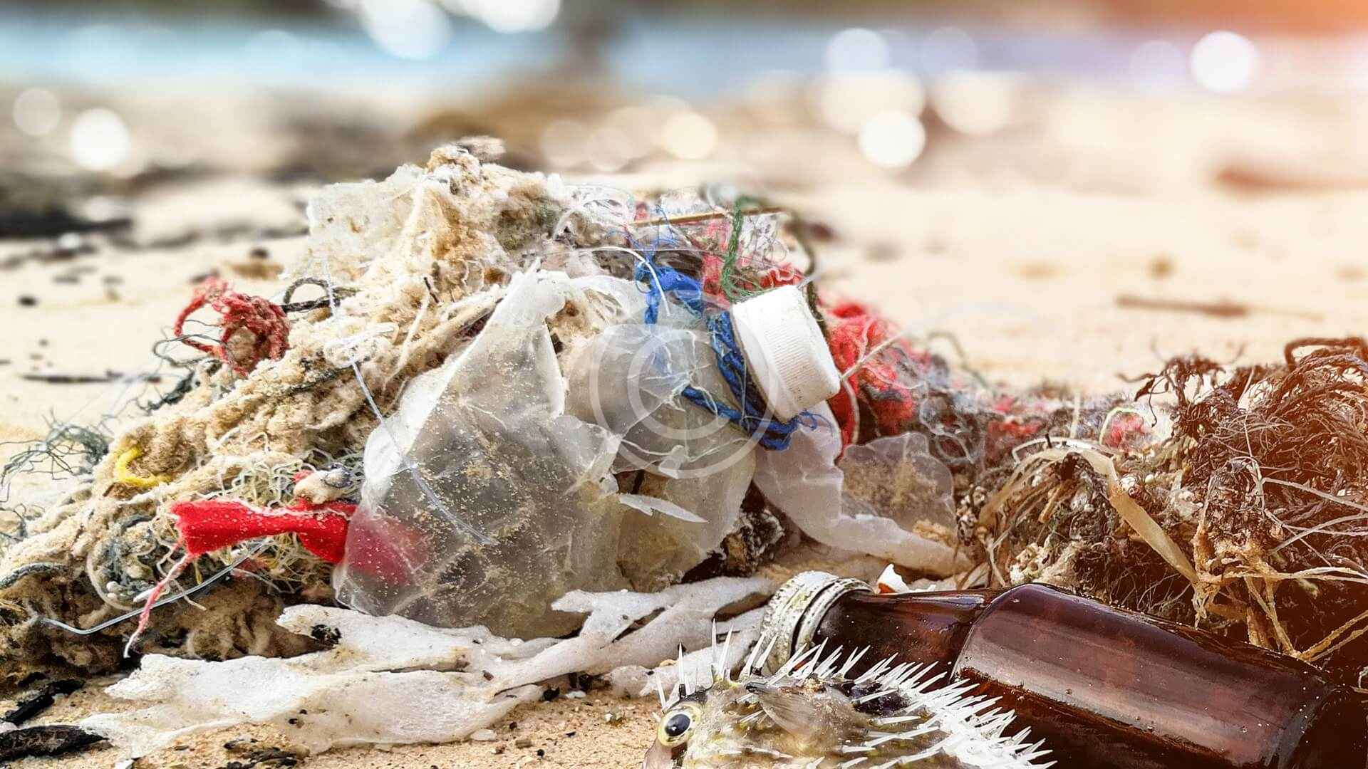 Plastic-Free Beaches, Rivers & Lakes