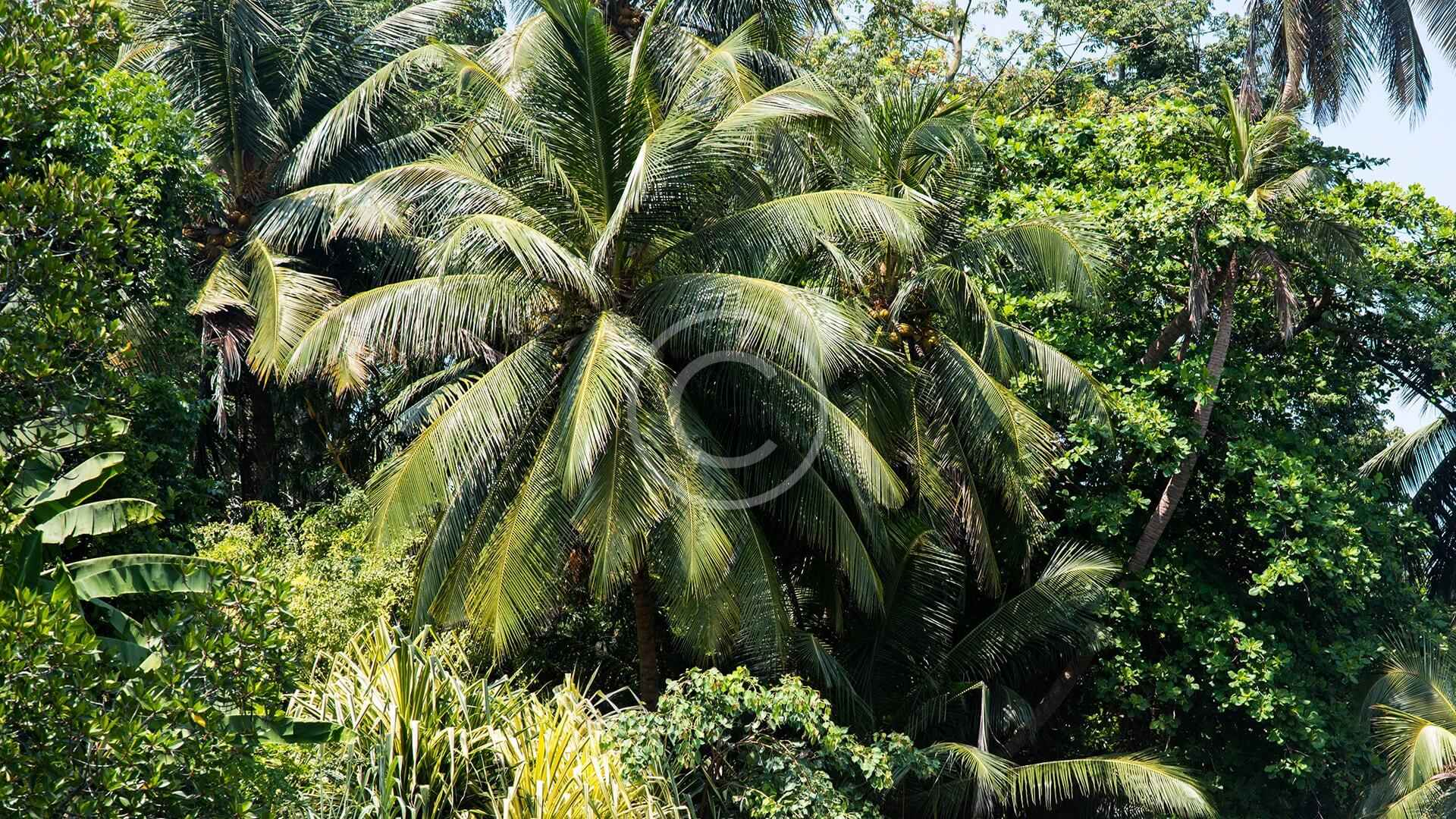 Tropical Forest Ecology & Conservation